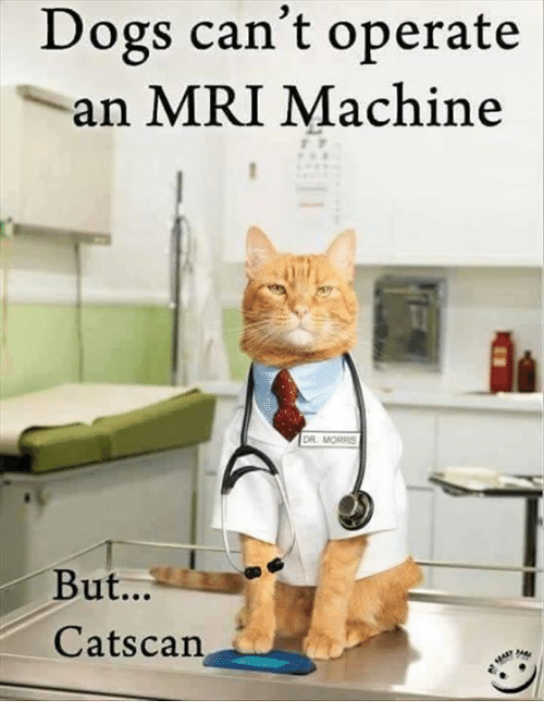 Dogs Can T Be Doctors But Cat Scan