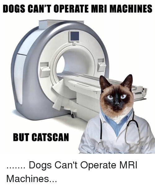 dogs cant operate mri machines but cat scan dogs 19364046 dogs can't operate mri machines but cat scan dogs can't operate