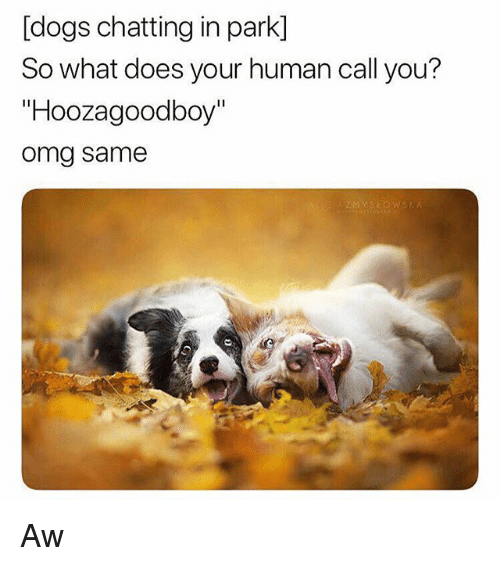 "Dogs, Omg, and What Does: [dogs chatting in park]  So what does your human call you?  ""Hoozagoodboy""  omg same Aw"