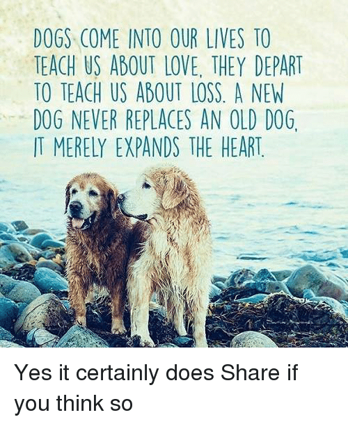 Dogs Come Into Our Lives To Teach Us About Love They Depart To Teach