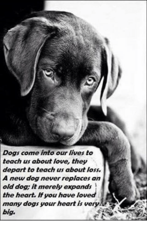 Dogs Come Into Our Lives To Teach Us About Love Thesy Depart To