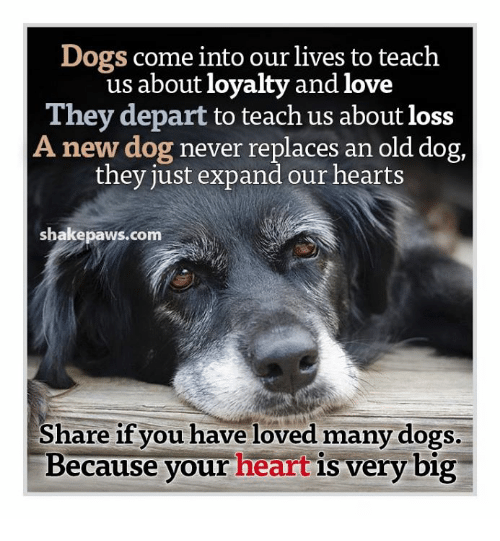 Dogs Come Into Our Lives To Teach Us About Loyalty And Love They