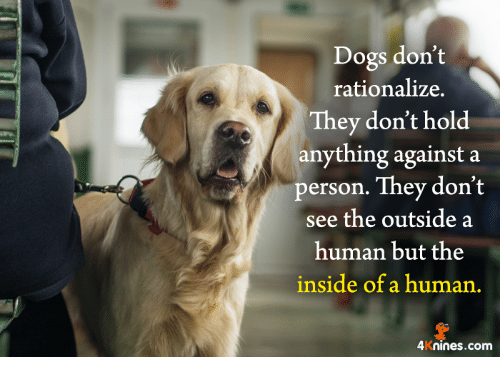 Dogs, Memes, and 🤖: Dogs don't  rationalize.  They don't hold  anything against a  person. They don't  see the outside a  human but the  inside of a human.  4Knines.com