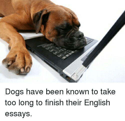 dogs have been known to take too long to finish their english  dogs english and shitty animalfacts dogs have been known to take too long