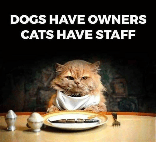 dogs-have-owners-cats-have-staff-5091656.png