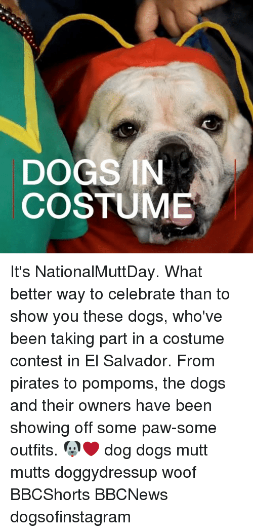 Dogs, Memes, and Pirates: DOGS IN  COSTUME It's NationalMuttDay. What better way to celebrate than to show you these dogs, who've been taking part in a costume contest in El Salvador. From pirates to pompoms, the dogs and their owners have been showing off some paw-some outfits. 🐶❤️ dog dogs mutt mutts doggydressup woof BBCShorts BBCNews dogsofinstagram