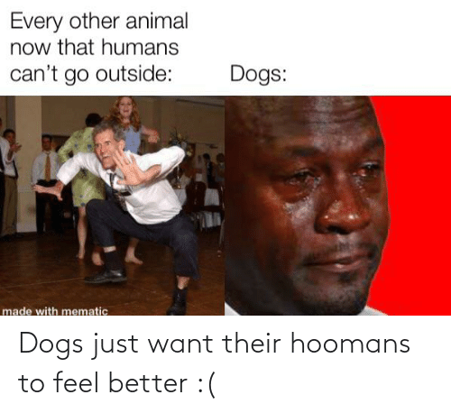 Dogs, Reddit, and Feel Better: Dogs just want their hoomans to feel better :(