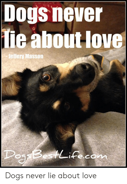 Dogs, Love, and Memes: Dogs never  ie about love  Jeffery Masson  Doj BestLife.com Dogs never lie about love
