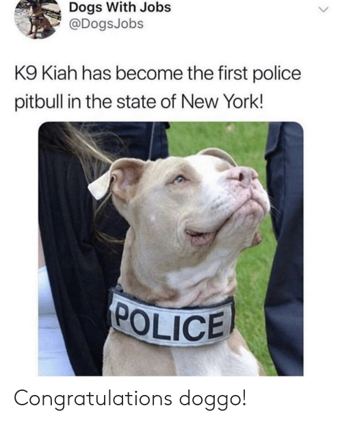 Dogs, New York, and Police: Dogs With Jobs  @DogsJobs  K9 Kiah has become the first police  pitbull in the state of New York!  POLICE Congratulations doggo!