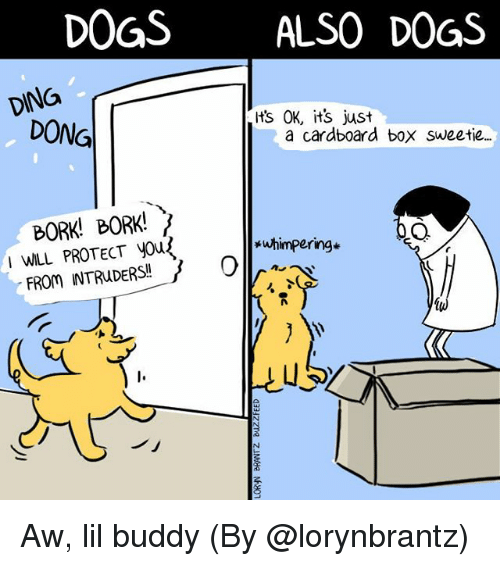 Dogs, Memes, and 🤖: DOGSALSO DOGS  DING  ts OK, its just  DONG  a cardboard box sweetie.  BORK! BORK!  I WILL PROTECT yous  *uhimpering*  uS  ノ」 Aw, lil buddy (By @lorynbrantz)