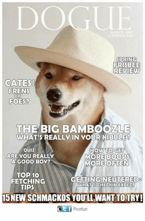dogue spring frisbee review cates freins or foes the big 22798006 dogue de bordeaux breed dogue meme on me me