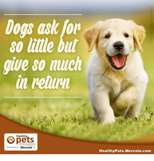 Memes, 🤖, and Becker: Dois ask for  so lille but  give so much  in retum  Healthy  With Dr. Karen Becker  Presented by Mercola  Healthy Pets Mercola.com