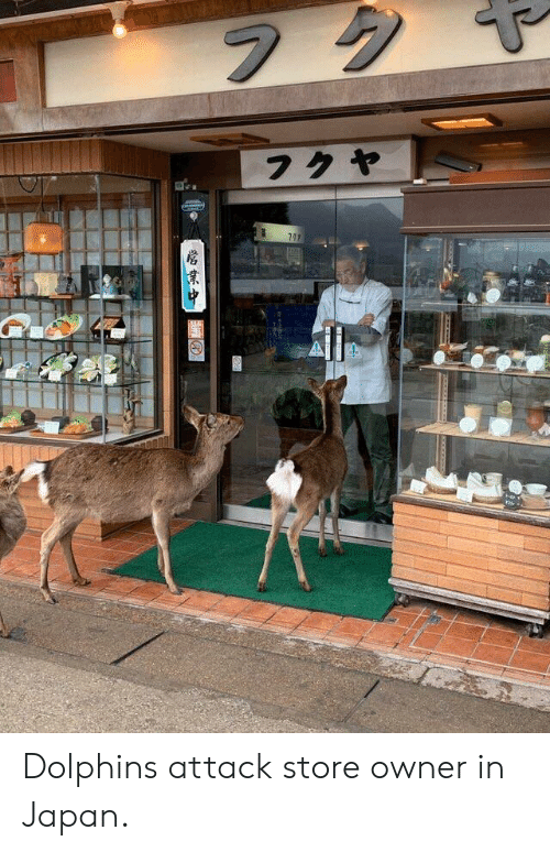 Dolphins, Japan, and Store: Dolphins attack store owner in Japan.