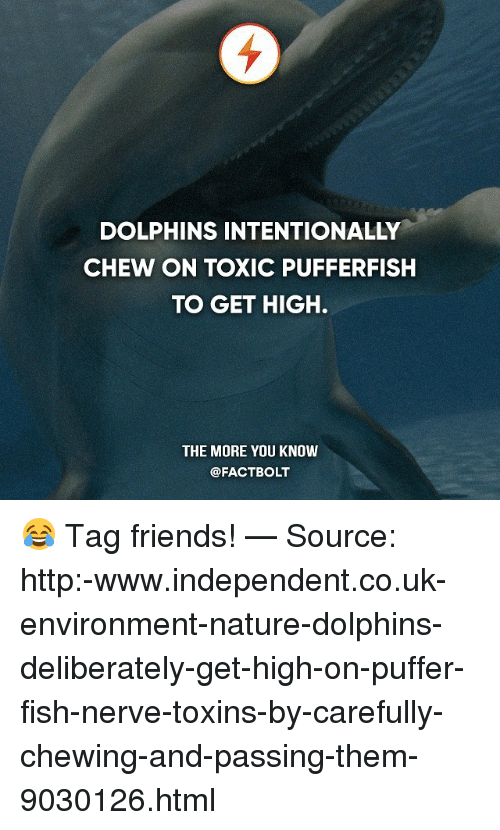 Friends, Memes, and The More You Know: DOLPHINS INTENTIONALLY  CHEW ON TOXIC PUFFERFISH  TO GET HIGH.  THE MORE YOU KNOW  @FACT BOLT 😂 Tag friends! — Source: http:-www.independent.co.uk-environment-nature-dolphins-deliberately-get-high-on-puffer-fish-nerve-toxins-by-carefully-chewing-and-passing-them-9030126.html