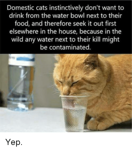 how to get cat to drink water from bowl