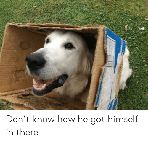 How, Got, and Don: Don't know how he got himself in there