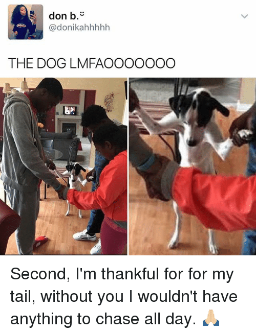 Memes, Chase, and 🤖: don b  donikahhhhh  THE DOG LMFA OOOOOOO Second, I'm thankful for for my tail, without you I wouldn't have anything to chase all day. 🙏🏼