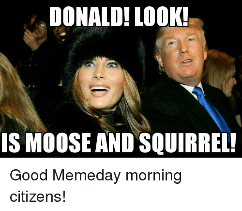 DONALD! LOOK! IS MOOSE AND SQUIRREL! Good Memeday Morning