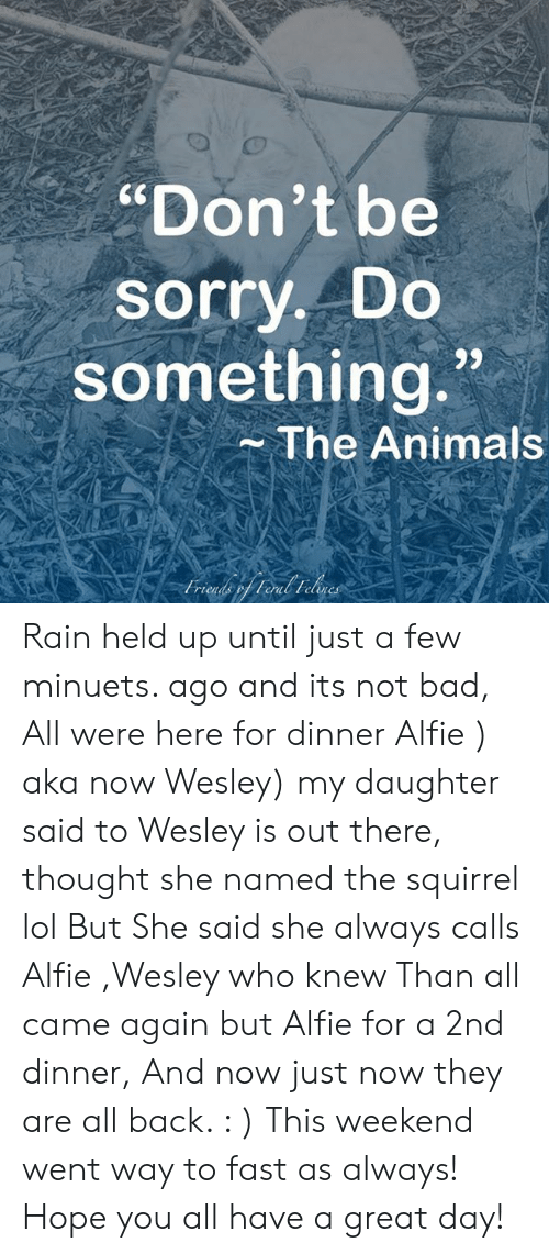 """Animals, Bad, and Lol: """"Don't be  sorry. Do  something.""""  The Animals  rict  elen Rain held up until just a few minuets. ago and its not bad, All were here for dinner Alfie ) aka now Wesley) my daughter said to Wesley is out there, thought she named the squirrel  lol  But She said she always calls Alfie ,Wesley  who knew   Than all came again but Alfie for a 2nd dinner,  And now just now they are all back. : ) This weekend went way to fast as always! Hope you all have a great day!"""