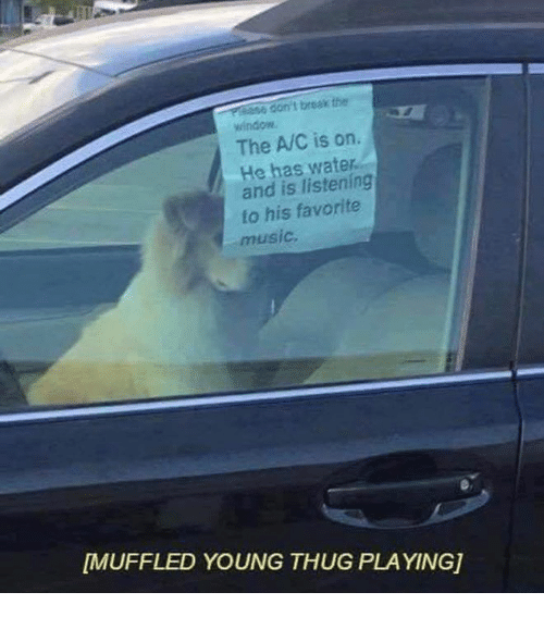 The The, Musical, and Musicals: don't break the  The AVC is on.  He has water  and is listening  to his favorite  music,  MUFFLED YOUNG THUG PLAYINGj
