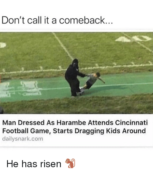 Football, Funny, and Game: Don't call it a comeback.  Man Dressed As Harambe Attends Cincinnati  Football Game, Starts Dragging Kids Around  dailysnark.com He has risen 🐒
