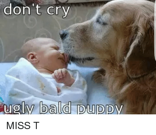Dont Cry Ugly Bald Puppy Miss T Crying Meme On Meme