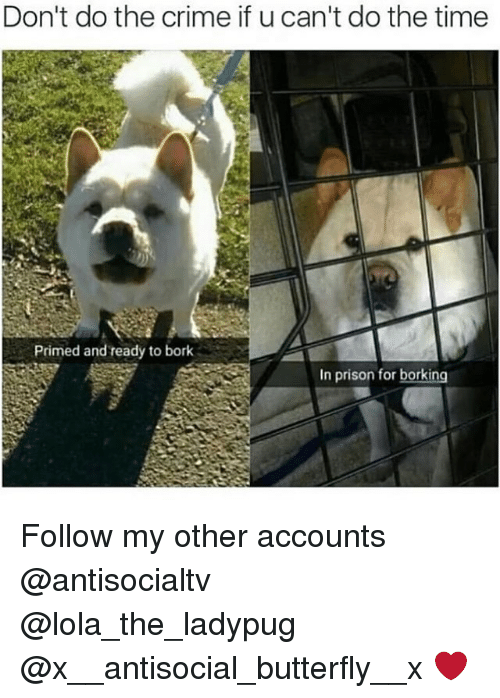 Crime, Memes, and Prison: Don't do the crime if u can't do the time  Primed and ready to bork  In prison for borking Follow my other accounts @antisocialtv @lola_the_ladypug @x__antisocial_butterfly__x ❤️