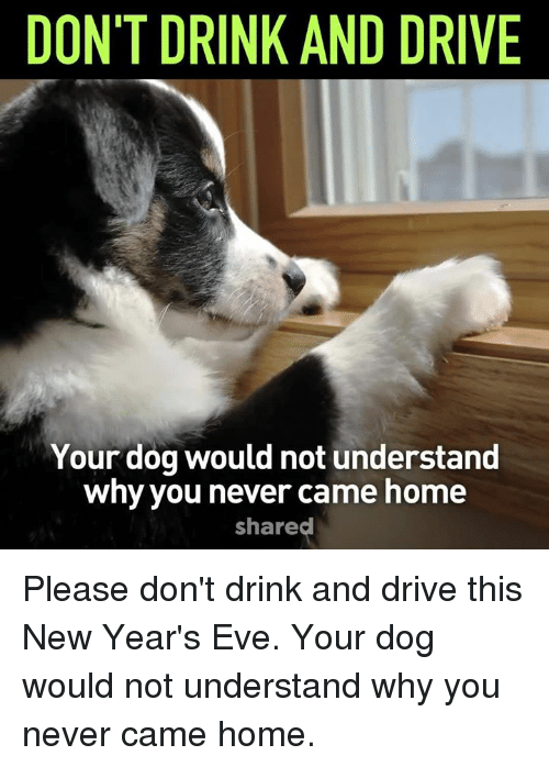 Memes, 🤖, and Eve: DON'T DRINK AND DRIVE  Your dog would not understand  why you never came home  shared Please don't drink and drive this New Year's Eve. Your dog would not understand why you never came home.