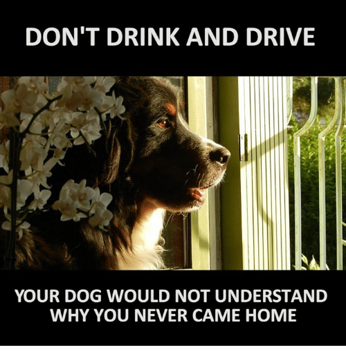 Memes, 🤖, and Why You: DON'T DRINK AND DRIVE  YOUR DOG WOULD NOT UNDERSTAND  WHY YOU NEVER CAME HOME