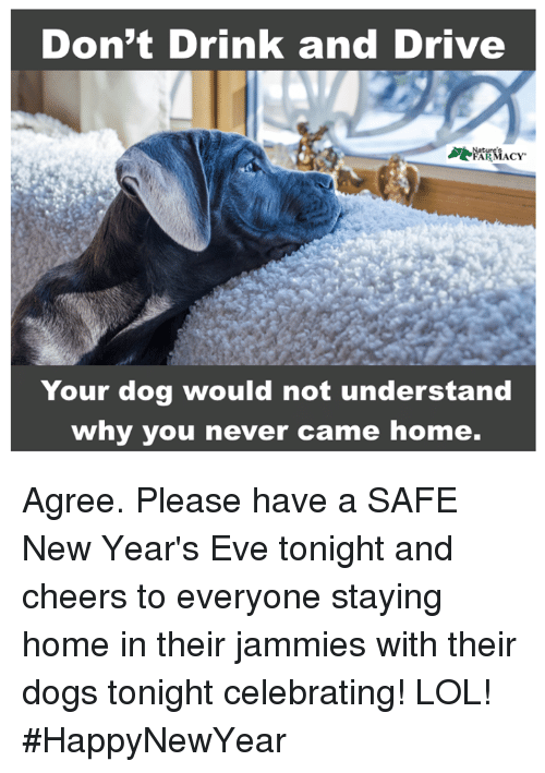 Dogs, Lol, and Memes: Don't Drink and Drive  Your dog would not understand  why you never came home. Agree. Please have a SAFE New Year's Eve tonight and cheers to everyone staying home in their jammies with their dogs tonight celebrating! LOL! #HappyNewYear