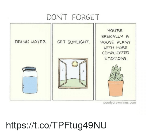 Memes, House, and Water: DONT FORGET  YOU'RE  BASICALL A  HOUSE PLANT  WITH MORE  COMPLICATED  EMOTIONS  DRINK WATER.  GET SUNLIGHT.  poorlydrawnlines.com https://t.co/TPFtug49NU