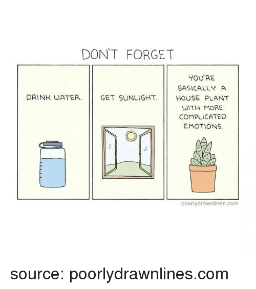 House, Water, and Com: DON'T FORGET  YOU'RE  BASICALLY A  DRINK WATER. GET SUNLIGHT HOUSE PLANT  WITH MORE  COMPLICATED  EMOTIONS  poorlydrawnlines.com source: poorlydrawnlines.com