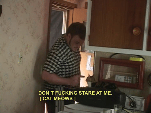Cat, Stare, and  Dont: DON'T FUCKING STARE AT ME.  I CAT MEOWS