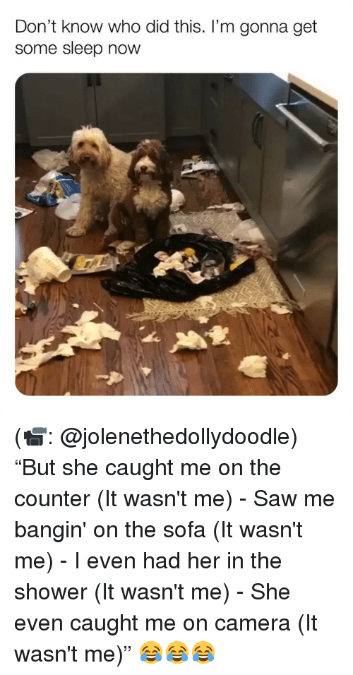 """Memes, Saw, and Shower: Don't know who did this. I'm gonna get  some sleep now (📹: @jolenethedollydoodle) """"But she caught me on the counter (It wasn't me) - Saw me bangin' on the sofa (It wasn't me) - I even had her in the shower (It wasn't me) - She even caught me on camera (It wasn't me)"""" 😂😂😂"""
