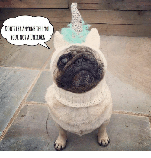DON'T LET ANYONE TELL YOU YOUR NOT a UNICORN | Meme on ME.ME