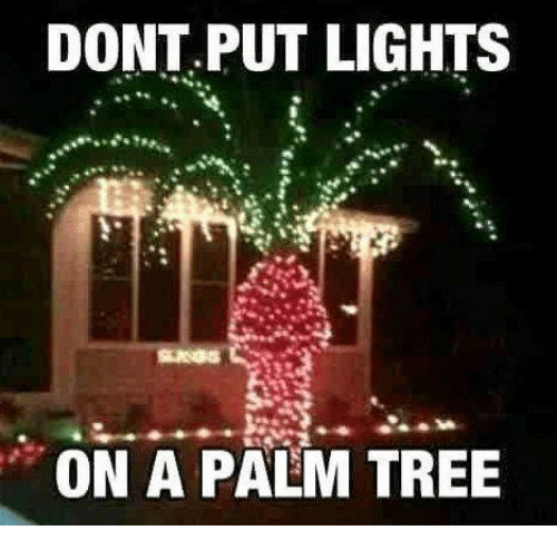 Memes Tree And Trees Dont Put Lights On A Palm