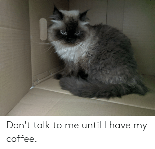 Coffee, Don't Talk to Me, and  Dont: Don't talk to me until I have my coffee.