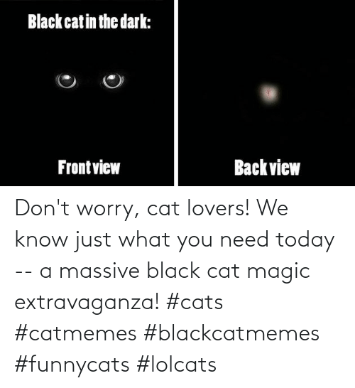 Cats, Black, and Magic: Don't worry, cat lovers! We know just what you need today -- a massive black cat magic extravaganza! #cats #catmemes #blackcatmemes #funnycats #lolcats