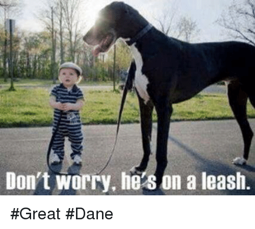 dont worry he8 on a leash great dane 13419798 ✅ 25 best memes about great dane great dane memes
