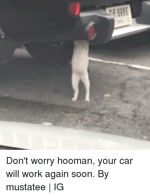 Dank, Soon..., and Work: Don't worry hooman, your car will work again soon.  By mustatee   IG