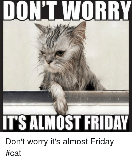 Friday, Memes, and 🤖: DON'T WORRY  IT'S ALMOST FRIDAY Don't worry it's almost Friday       #cat
