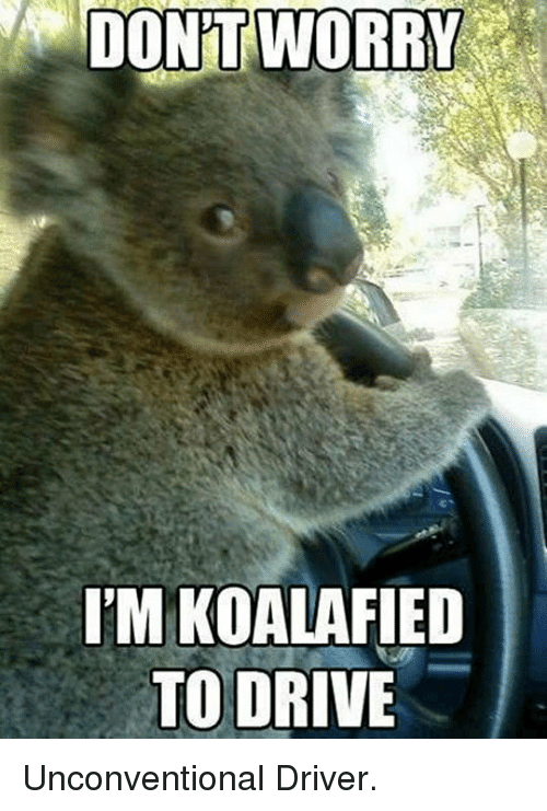 Drive, Driver, and Worry: DON'T  WORRY  T'M KOALAFIED  TO DRIVE <p>Unconventional Driver.</p>