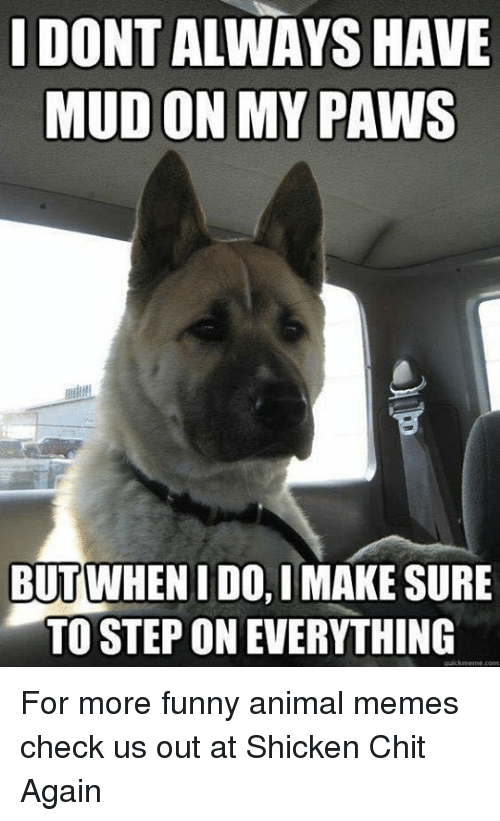 dontalways have mud on my paws but whenidoimake sure to 7550283 ✅ 25 best memes about funny animal meme funny animal memes,Funny Animal Memes