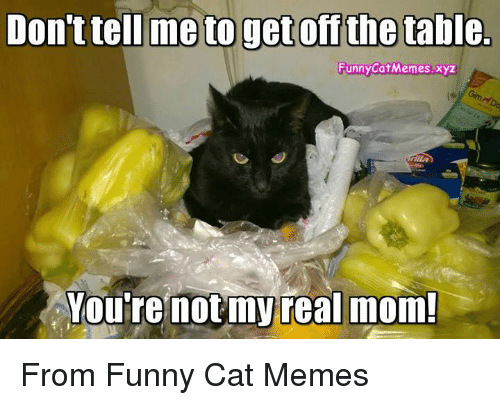 Funny Mom Memes : Dontteil metogetoff the table funny catmemesxyz you're not my real