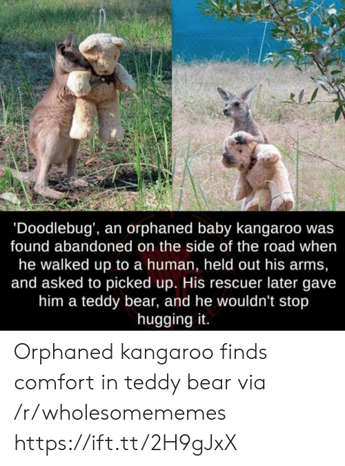 Bear, The Road, and Baby: 'Doodlebug', an orphaned baby kangaroo wa:s  found abandoned on the side of the road when  he walked up to a human, held out his arms,  and asked to picked up. His rescuer later gave  him a teddy bear, and he wouldn't stop  hugging it. Orphaned kangaroo finds comfort in teddy bear via /r/wholesomememes https://ift.tt/2H9gJxX