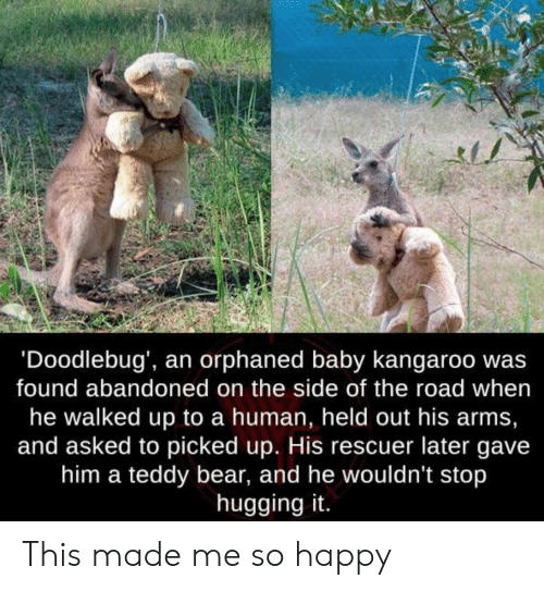 Bear, Happy, and The Road: 'Doodlebug', an orphaned baby kangaroo wa:s  found abandoned on the side of the road when  he walked up to a human, held out his arms,  and asked to picked up. His rescuer later gave  him a teddy bear, and he wouldn't stop  hugging it. This made me so happy