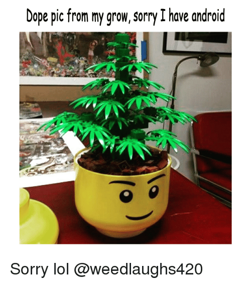 Android, Dope, and Lol: Dope pic from my grow, sorry I have android Sorry lol @weedlaughs420