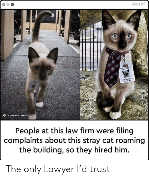 Lawyer, Cat, and Him: dose  LEON ADVOGATO  Dr Jeanette Laredo  People at this law firm were filing  complaints about this stray cat roaming  the building, so they hired him. The only Lawyer I'd trust