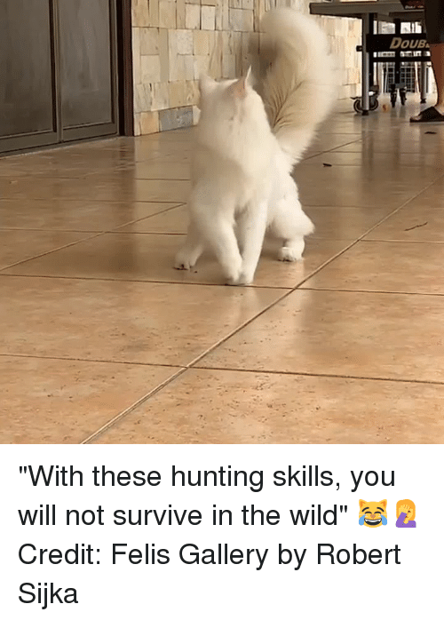 """Hunting, Wild, and Will: DOUB """"With these hunting skills, you will not survive in the wild"""" 😹🤦♀️  Credit: Felis Gallery by Robert Sijka"""