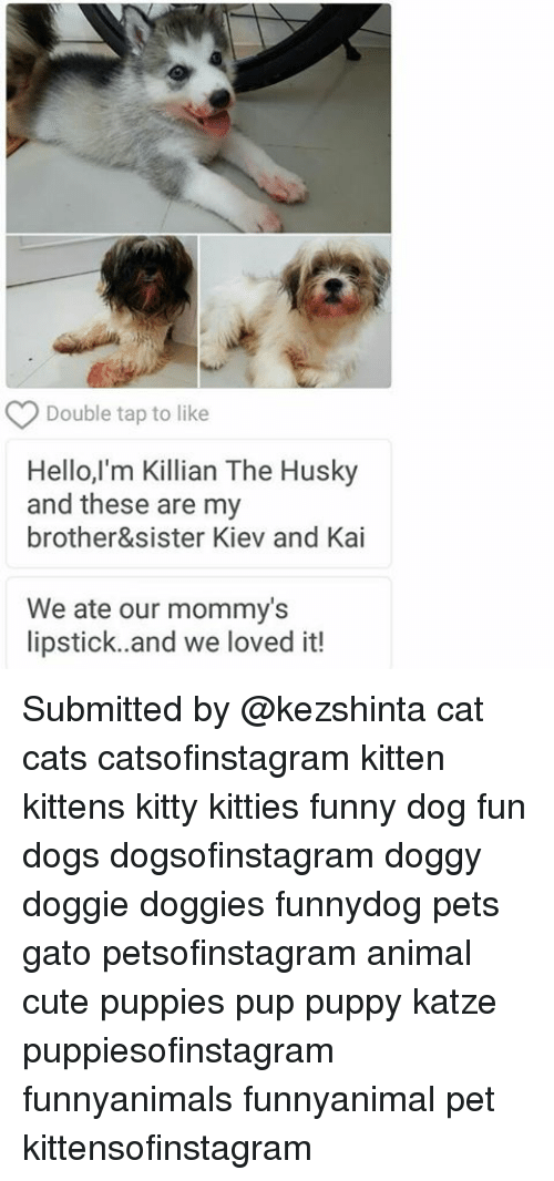 Double Tap To Like Hello Im Killian The Husky And These Are My